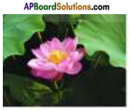 AP Board 7th Class Science Important Questions Chapter 12 Reproduction in Plants 1