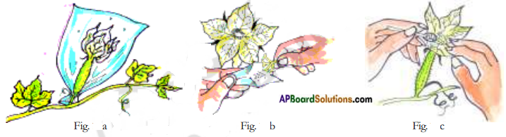 AP Board 7th Class Science Important Questions Chapter 12 Reproduction in Plants 10