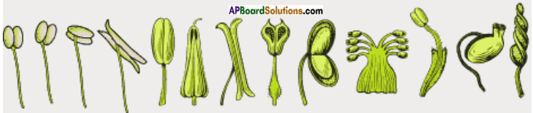 AP Board 7th Class Science Important Questions Chapter 12 Reproduction in Plants 16