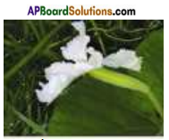 AP Board 7th Class Science Important Questions Chapter 12 Reproduction in Plants 2