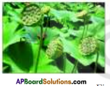 AP Board 7th Class Science Important Questions Chapter 13 Seed Dispersal 1