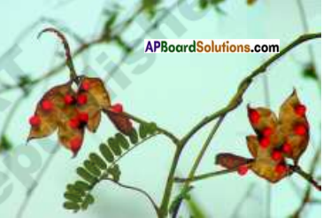 AP Board 7th Class Science Important Questions Chapter 13 Seed Dispersal 8