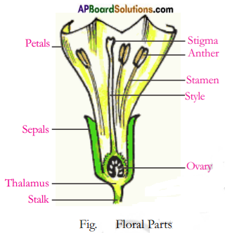AP Board 7th Class Science Solutions Chapter 12 Reproduction in Plants 1