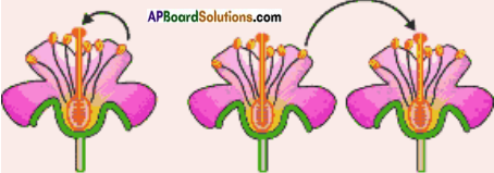 AP Board 7th Class Science Solutions Chapter 12 Reproduction in Plants 4