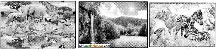 AP Board 8th Class Telugu Solutions Chapter 6 ప్రకృతి ఒడిలో 4
