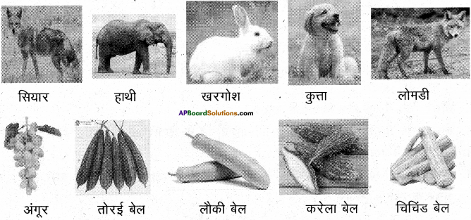 AP Board 6th Class Hindi Solutions सन्नद्धता कार्यक्रम Chapter 13 खट्टे अंगूर 3