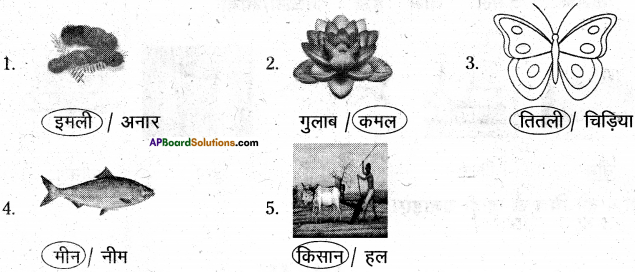 AP Board 6th Class Hindi Solutions Chapter 2 तितली 18