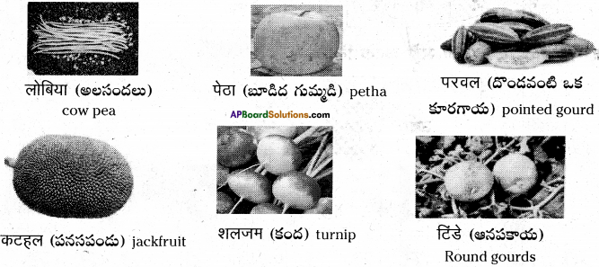 AP Board 6th Class Hindi Solutions Chapter 7 दो मित्र 13
